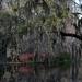 Spring 2016, Magnolia Gardens, Charleston, SC by congaree