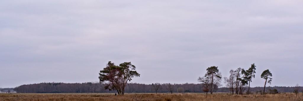 heath landscape by xof