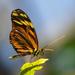Free as a Butterfly by lynne5477