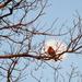 Moon Robin by kareenking
