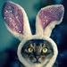 Raspberry Rabbit by berelaxed