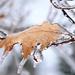 Frozen leaf! by fayefaye