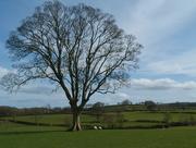 25th Mar 2016 - English countryside