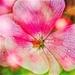 Psychedelic geranium by pistache