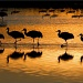 Bosque del Apache Sunrise by aikiuser