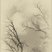 TREES WITHOUT HOPE TO SURVIVE THE DROUGHT by sdutoit