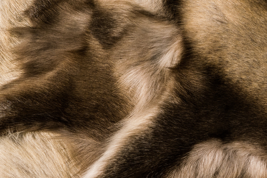 Fur Trade © Gill Haynes by gill_h