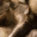 Fur Trade © Gill Haynes