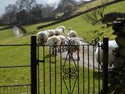 25th Mar 2016 - over the garden gate