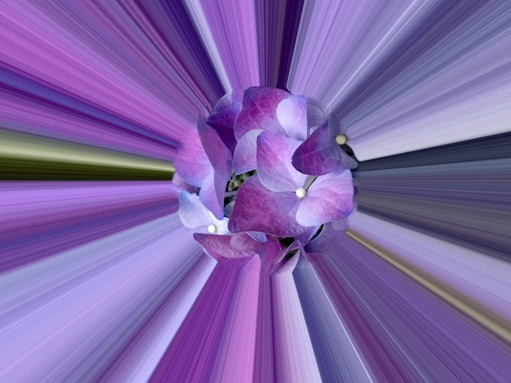 purple and blue by quietpurplehaze