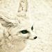 FENNEC FOX by annied