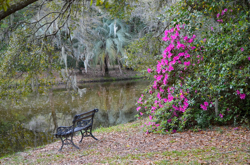 My favorite place for quiet contemplation, Charles Towne Landing State Historic Site, Charleston, SC by congaree