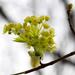 Blooming tree by cherrymartina