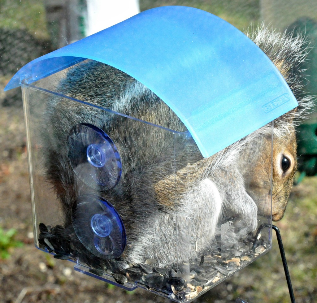 This new feeder is occupied !!!!! by sailingmusic