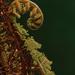 fern frond by maree_sanderson