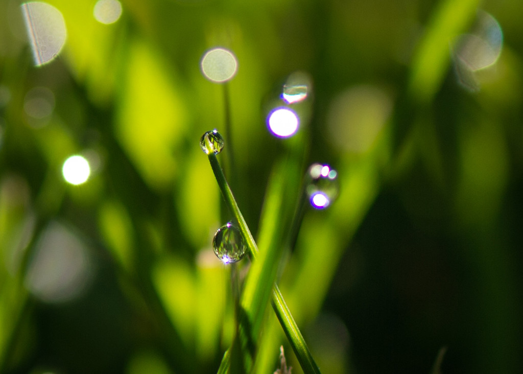 Morning Dew by epcello