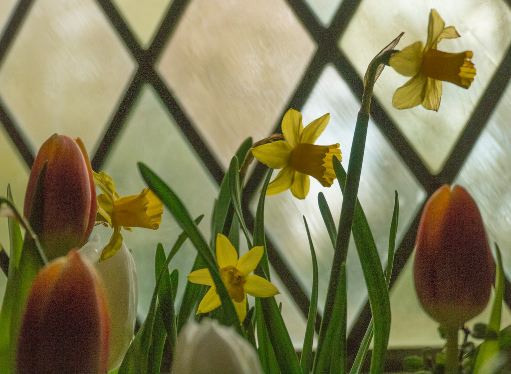 Easter Window © Gill Haynes by gill_h