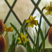 Easter Window © Gill Haynes