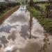 Doverdale Flood © Gill Haynes