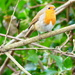 A Robin On A Spring Day by snoopybooboo