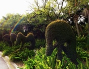 31st Mar 2016 - Topiary...No.1