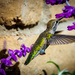 Fledged Hummingbird Baby by elatedpixie