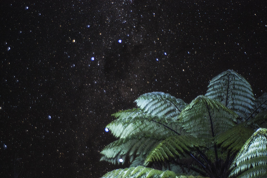 fern and southern cross  by kali66