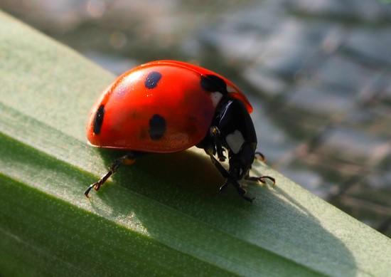 My first Ladybird! by janemartin
