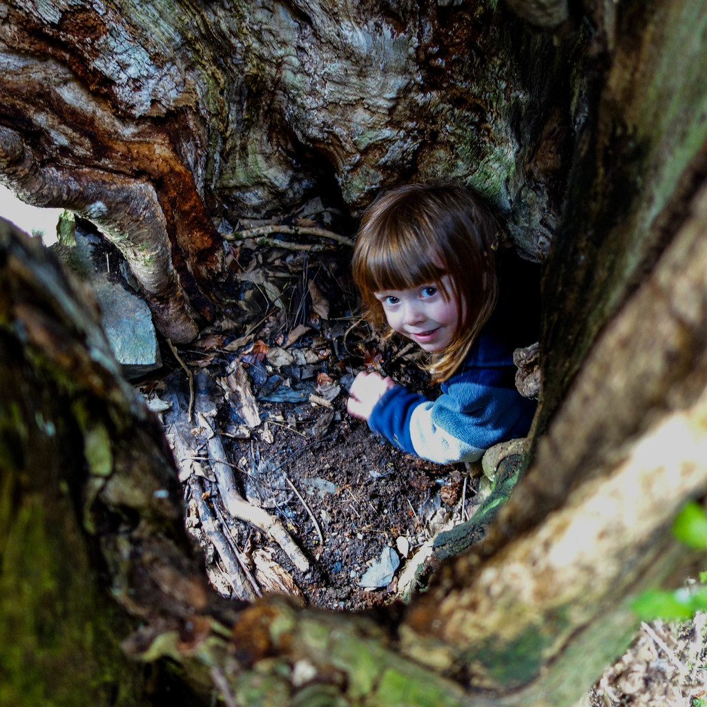 The Hollow Tree by overalvandaan