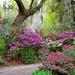 Magnolia Gardens, Spring 2016 by congaree