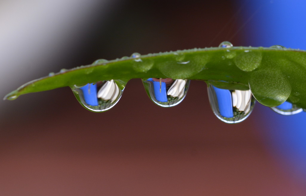 After The Rain_DSC7692 by merrelyn