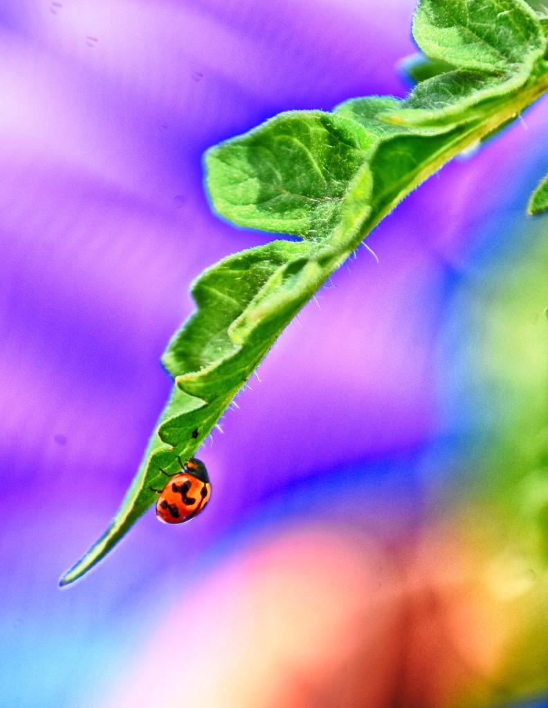 Ladybug by winshez