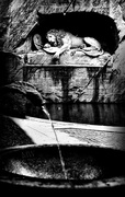 "1st Apr 2016 - 2016-04-01 ""the"" lion, lucerne"