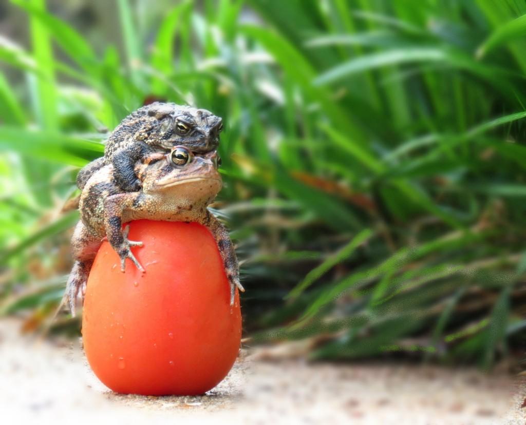 Return of Frogmato: Homage To Jason by grammyn