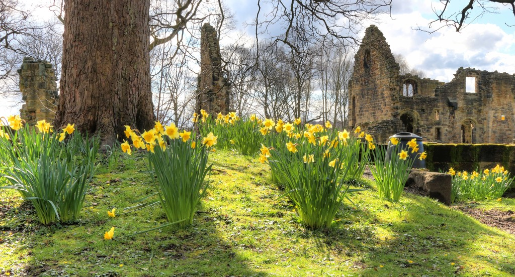 Spring at Kirkstall Abbey by shepherdmanswife