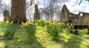 2nd Apr 2016 - Spring at Kirkstall Abbey