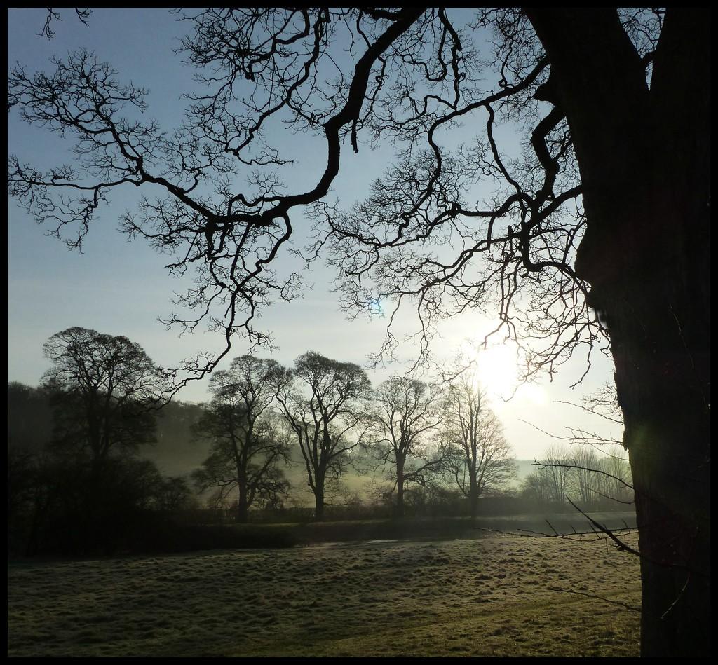 A beautiful morning... by jokristina