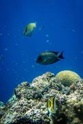 3rd Apr 2016 - tropical fish au naturale