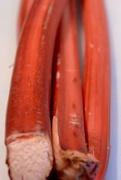 19th Mar 2016 - Rhubarb