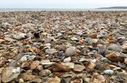 30th Mar 2016 - She sells sea shells on the sea shore