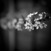 April - Blossom by newbank