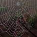 Heavy Fog Left Spiderwebs by milaniet
