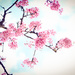 More Blossoms! I Love Spring by gailmmeek