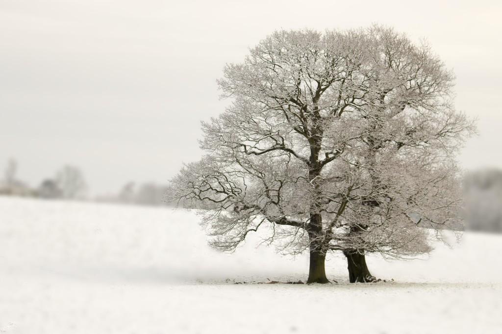 Back to winter by shepherdmanswife