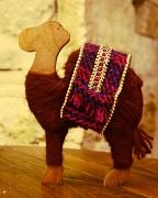 3rd Dec 2010 - camel