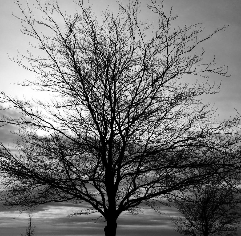Drama Tree by mandapanda1971