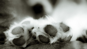 9th Apr 2016 - dog's paws