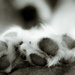 dog's paws by northy