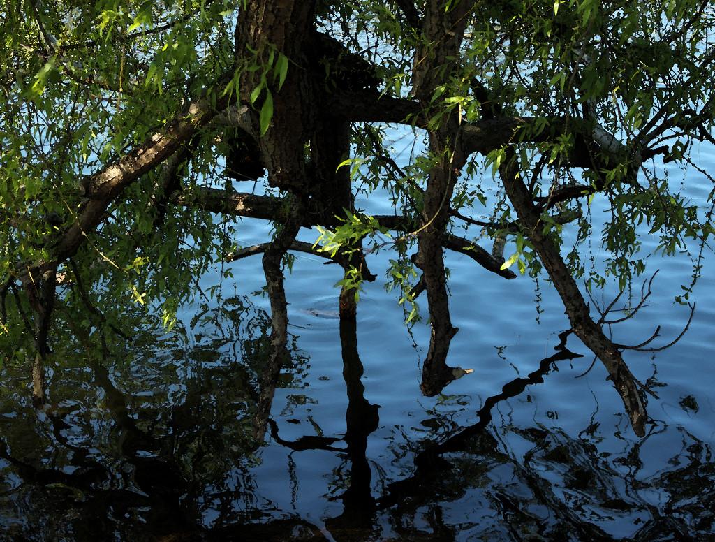 water tree by nanderson