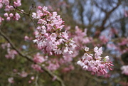 10th Apr 2016 - Blossom